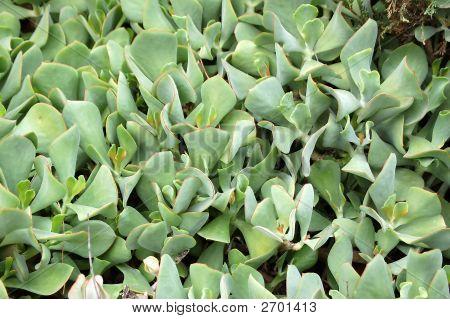 Desert Plant Texture