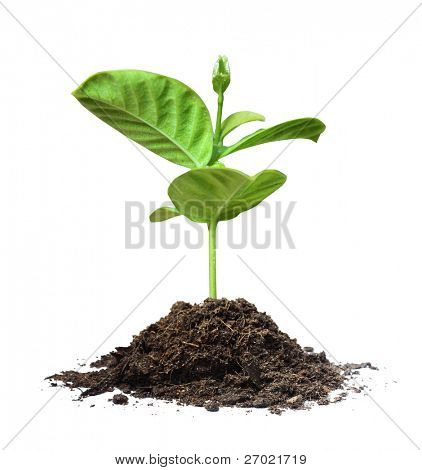 plant tree white background