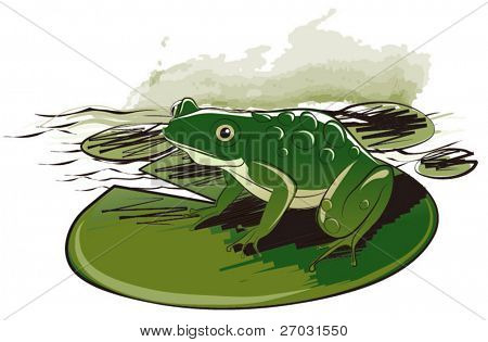 vector drawing of frog