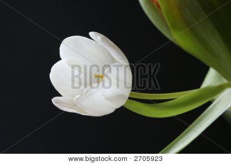 White Tenderness