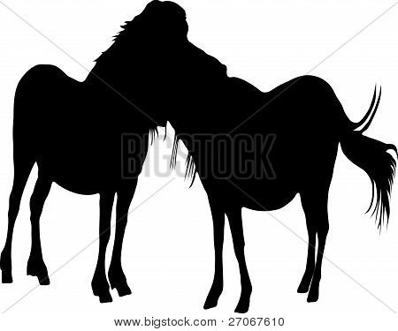 Silhouette Two Horses