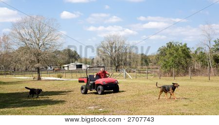 Farmer & His Dogs