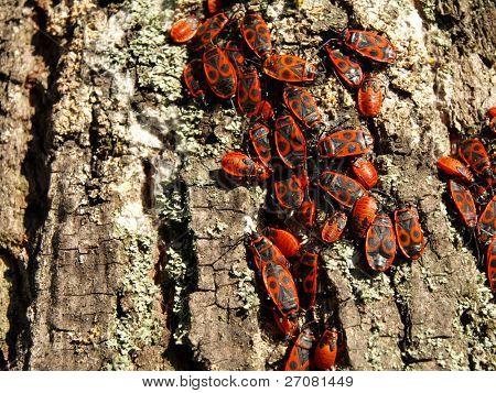 bugs colony