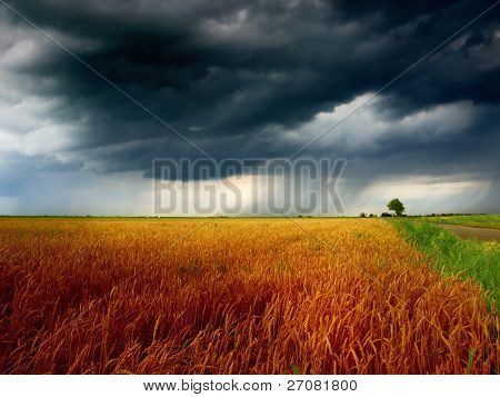 Grain field and storm clouds