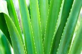 nature, botany and flora concept - close up of exotic green plant poster