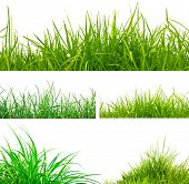 picture of neat  - 3 backgrounds of fresh spring green grass and 2 tufts of grass  Isolated On White - JPG