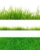 stock photo of grass  - 3 backgrounds of fresh spring green grass  Isolated On White - JPG