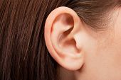 foto of human ear  - Human ear closeup - JPG