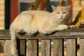 At The Top Of The Wooden Fence Lies A Cute Beige Cat Against The Background Of A Village House And L poster