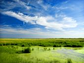 picture of bayou  - Green Bayou - JPG