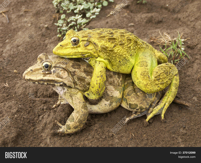 ебала жаба гада