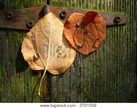 Autumn Leaves Wallpaper Background
