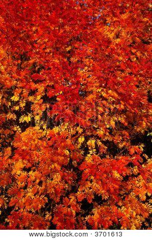 Autumn Colourful Landscape.
