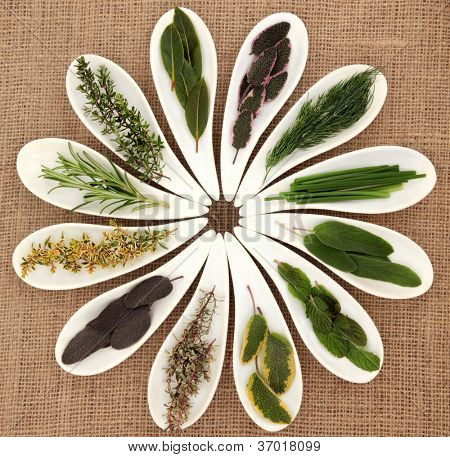 Fresh herb selection of varieties of sage, thyme, fennel, chives, mint, rosemary and bay leaf sprigs in white porcelain dishes over hessian background.