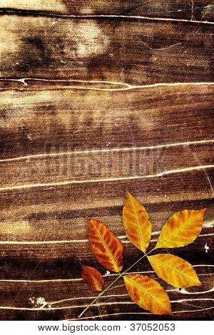 Grunge background with autumn leaf