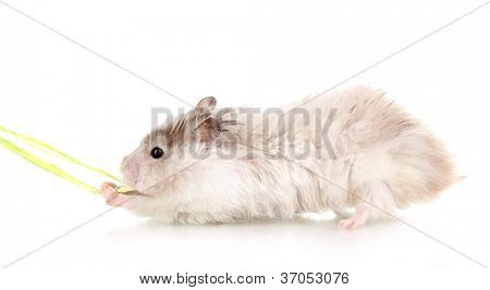 Cute hamster and rope isolated white