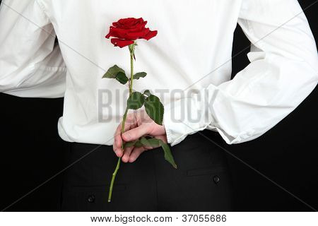 hombre que sostiene Rosa close-up