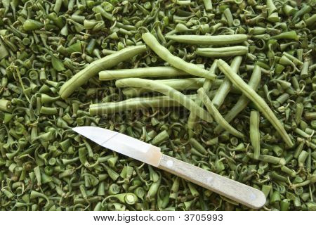 Green Bush Beans On Bed Of Bean Ends