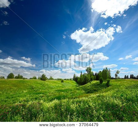 Summer green meadow with pine trees and blue cloudy sky