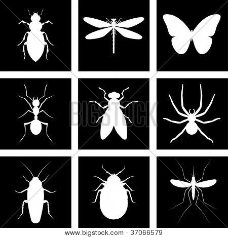 Vector illustration silhouette insect