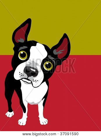 Vector illustration of a Boston Terrier dog