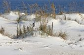 stock photo of sea oats  - A heron standing among sea oats at the beach - JPG