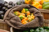Peppers in Burlap Bag