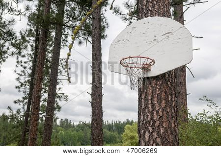 Pine Tree Basketball Hoop On A Rainy Day