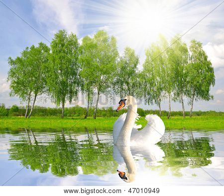 Spring landscape with swan on water level