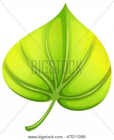 Illustration of a heart-shaped leaf on a white background