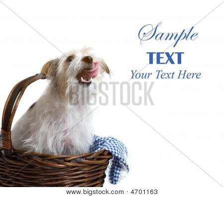 Pup In Basket