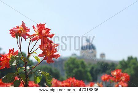 Roses In The Volksgarten, Vienna