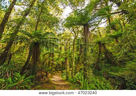 Verdant Trail In A Sub-tropical Forest