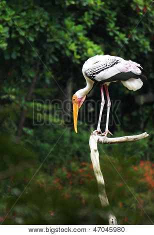 Stork looking on prey standing on the trunk