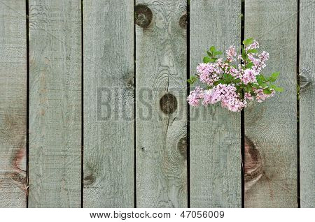 Lilac Through A Fence