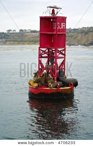 Sea Lions On A Dana Point Buoy