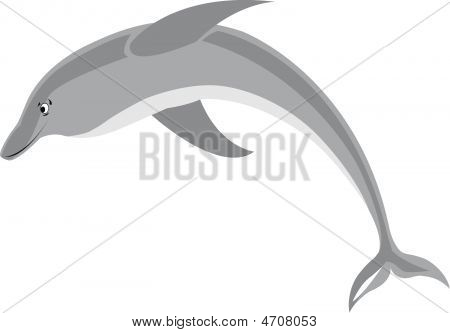 Smiling Dolphin On White Background