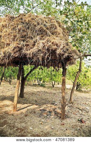 Indian Haystack On Stilts In Forrest