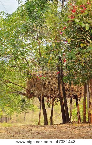 Indian Cattle Rearing Haystack On Stilts