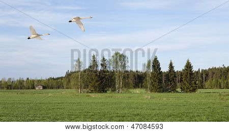 Nordic meadows in late sunlit.