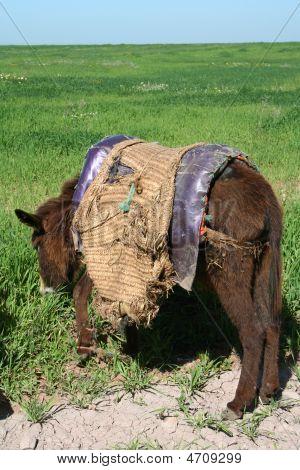 Donkey In Morocco