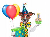 stock photo of baby dog  - birthday dog with balloons and a cupcake - JPG