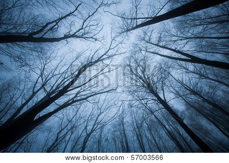 Dark Scene With Tree Tops Ending In Fog