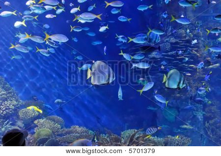 fishes in the water