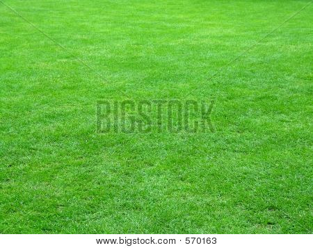 Football Field Grass