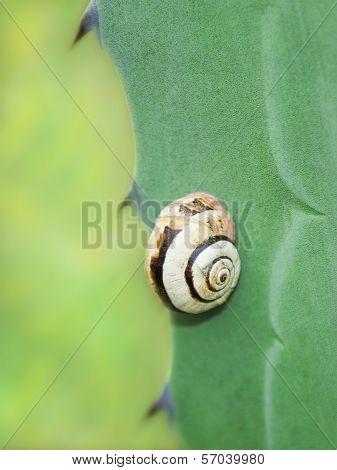 Garden snail on an agave