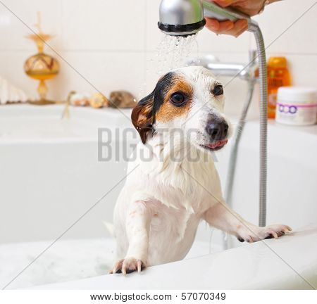 Dog Taking A Bath In A Bathtub
