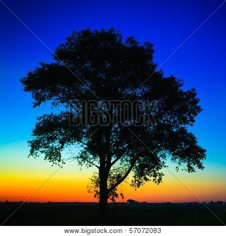 Old Tree In Sunset
