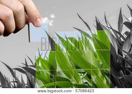 Man Bringing Life Back To Nature