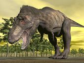 stock photo of prehistoric animal  - One tyrannosaurus dinosaur walking aggressively mouth open in nature with trees by sunset - JPG